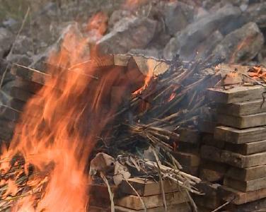 ag视讯论坛|官方网站县森林公安集中销毁一批松材线虫疫木