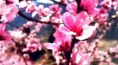 手边的春天   人间四月芳菲尽 香溪百花始盛开