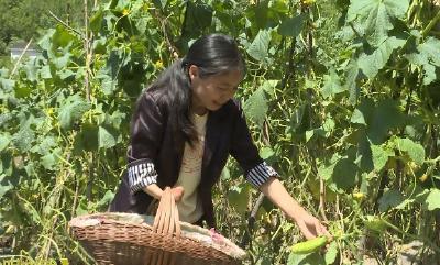甘元珍:贫困残疾母亲单手撑起一个家