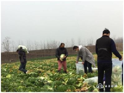 """沙洋马良镇:1.6万斤""""爱心蔬菜""""支援疫情防控"""