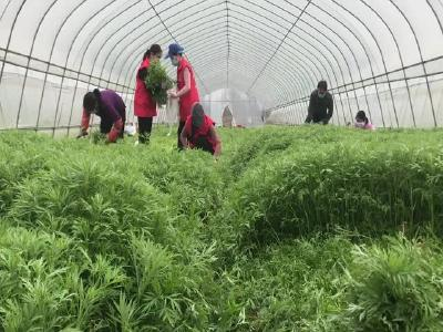 【短视频】爱心蔬菜红马甲  抗击疫情暖人心