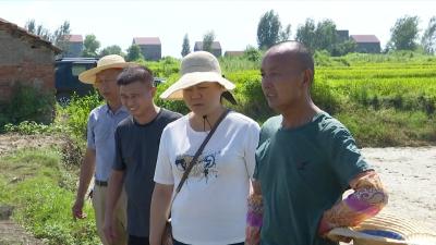 湖北沙洋:全力开展农业抗灾自救