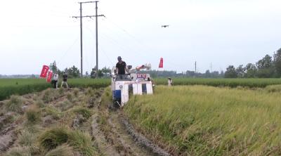 """县农业农村局:建立产业指导员制度 解决产业扶贫""""最后一公里""""难题"""