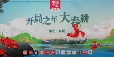 """直播:春天我和小龙虾有个约会——湖北宜城小龙虾""""水上""""春耕"""