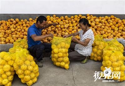 特色果蔬种植助脱贫增收