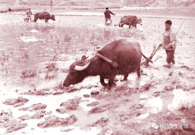 屈原传说《灵牛献绳》