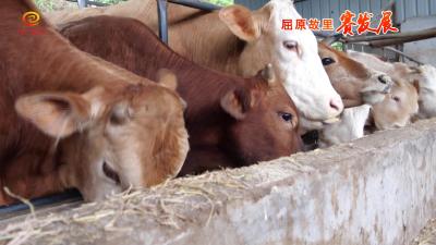 从稻田到牛棚 循环产业助发展