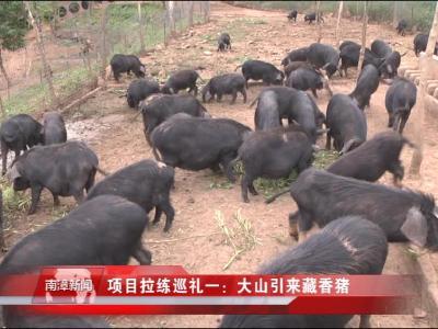 南漳新闻丨项目拉练巡礼一:大山引来藏香猪