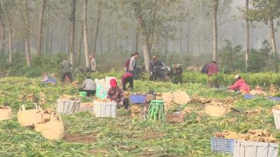 清河区黄莲树社区:全力服务产业发展 鼓起群众钱袋子