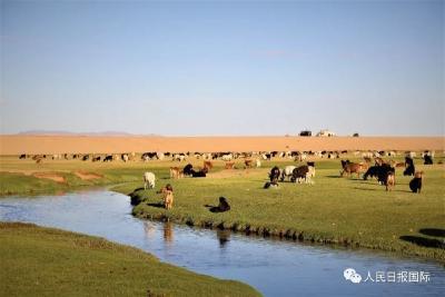 羊要来了!一起去蒙古国牧场实地看羊