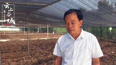 谷城茨河镇前庄村:发展中药材种植 带动村民家门口就业