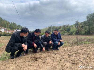 """方家咀乡:拓展特色种养产业 打造农民增收的""""定海神针"""""""