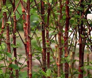 英山国家湿地公园助力联系村发展特色产业