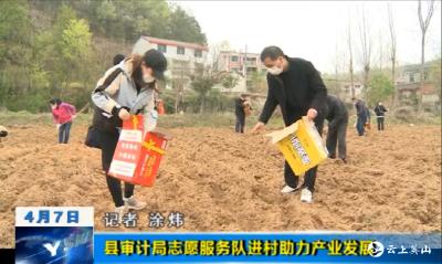 【视频】英山县审计局志愿服务队进村助力产业发展