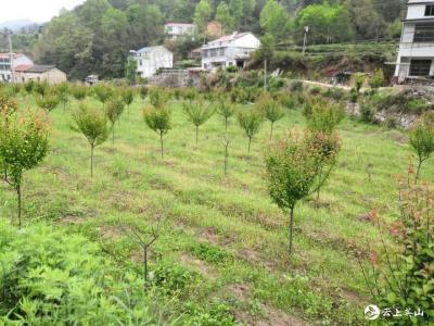 草盘地镇西硔村:产业发展描绘乡村振兴蓝图