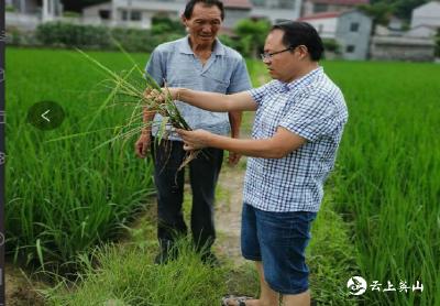 英山县杨柳湾镇防治水稻细菌性基腐病