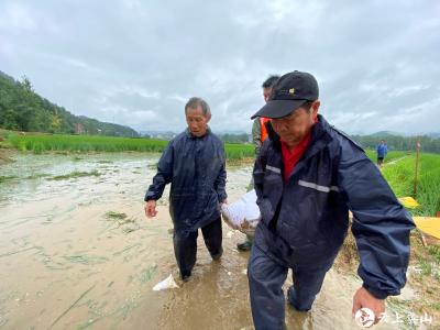 【快讯】英山金家铺镇杨家河村组织村民对水毁渠道进行恢复