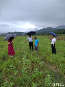 英山县农业农村局科技抗灾保丰收