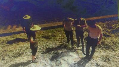 防汛责任到岗到人  英山县水利和湖泊局及时排除蚁患