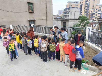 """英山县温泉小学附属幼儿园开展""""亲近自然  播种希望""""种植活动"""