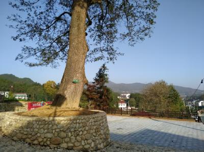 蝶变之路 ——陶家河乡美丽乡村建设探寻
