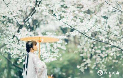 2021英山天马寨樱花花海文化旅游节,3月4日盛大迎客!免费送门票!