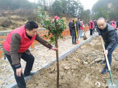 陶家河乡干部职工义务植树美化河堤