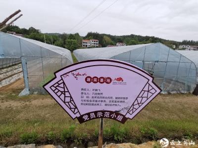 金家铺镇:推动党建和产业发展深度融合 助力乡村振兴