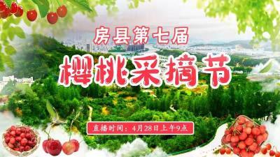 直播|房县第七届樱桃采摘节