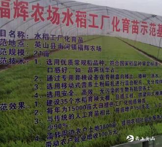 英山县福辉农场工厂化育秧助农户增收