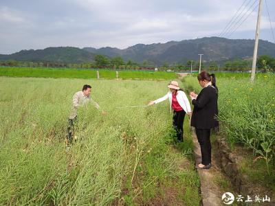 县农业农村局开展油菜产量结构调查