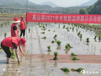 县农业综合执法大队开展插秧志愿服务活动