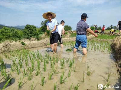 """南河镇青年读书班:体验农耕文化 做新时代的""""种稻人"""""""