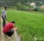 【学党史 办实事】农技专家上门除虫害保秧苗