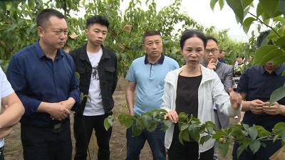 枝江市:乡村课堂 专家教授为农民技术员释疑解惑