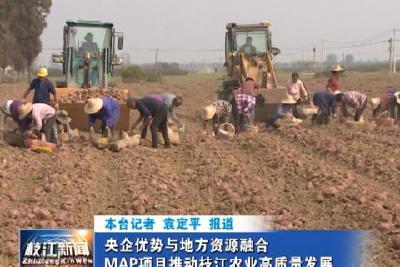 V视| 央企优势与地方资源融合  MAP项目推动枝江农业高质量发展