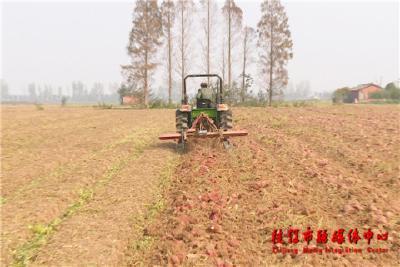 央企优势与地方资源融合  MAP项目推动枝江农业高质量发展