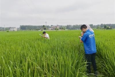 """产业强起来 乡村美起来 农民富起来 ——探访让农业科技""""长进泥土里""""的枝江实践"""