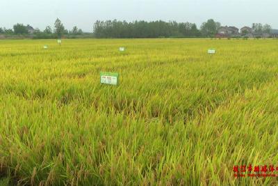 枝江:优化结构 提升效益做优做强农业产业
