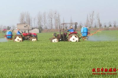 百里洲镇抢抓春季田间管理促进夏季作物丰收