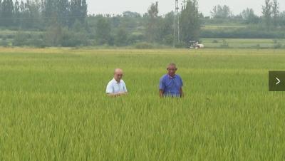 枣阳:秋粮丰收在望 单产总产有望超过去年