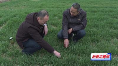 枣阳:加强田间管理  确保粮食丰收