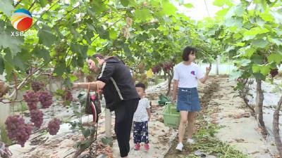 【视频】又到一年采摘季 秀美浠水瓜果香