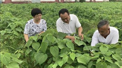 湖北老河口:打造田园综合体 让村民家门口就业致富