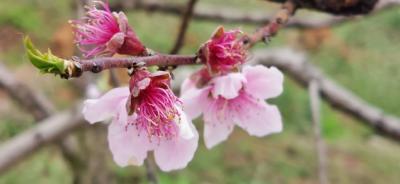 湖北老河口:春来赏桃花,灼灼动人心