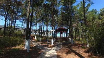 湖北老河口:绿色杨岗 生态乐园