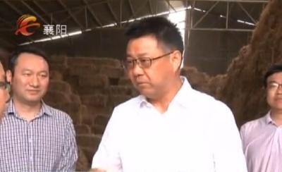 秦军到宜城调研养牛业发展情况