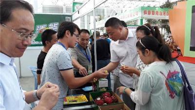 襄阳优质农产品亮相武汉农博会