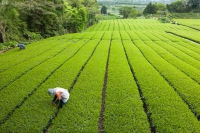 襄阳市今年农业十大重点工作确定
