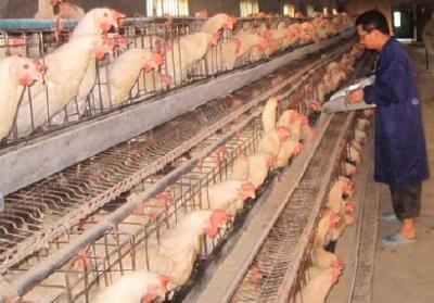 襄阳禁养区内畜禽养殖场要关闭搬迁